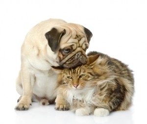 Dog and Cat 2